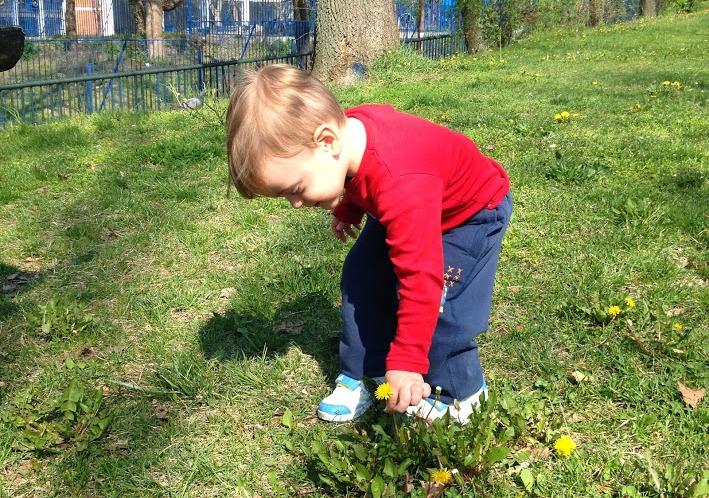 Andrej bere cvece