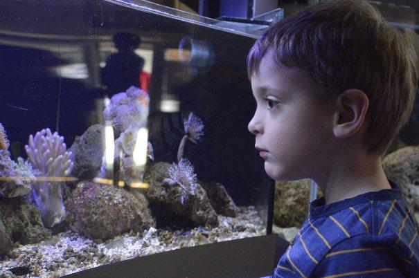 Javni akvarijum i tropikarijum